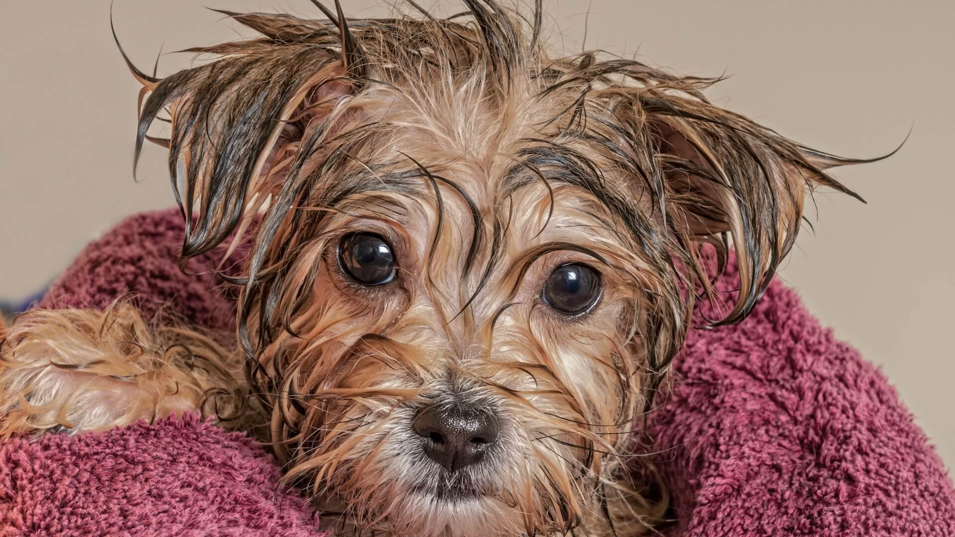 Cosmetica canina